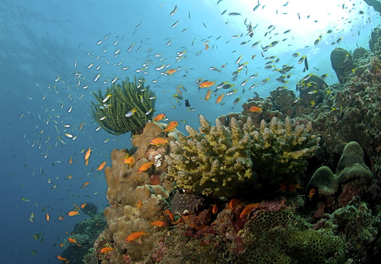 Coral Reef at Andaman